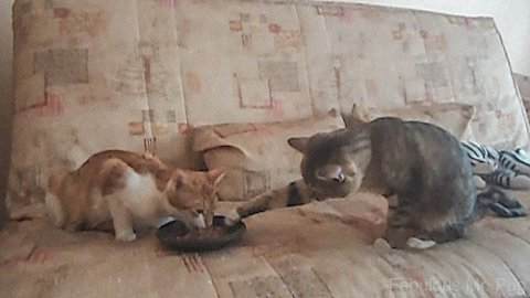 Cat Steals Food with its Paws