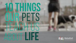 10 important things our pets teach us about life - Video