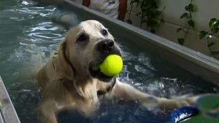 Germany's First Indoor Swimming Pool For Dogs - Video