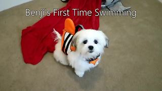 Benji the dog's first swimming experience