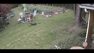 Squirrel narrowly escapes certain death from stalking cat - Video