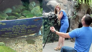 An otterly adorable proposal sees couple engaged thanks to some very special helpers - Video