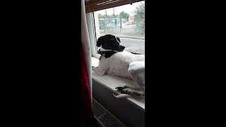 Silly doggy chooses most uncomfortable spot to rest