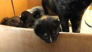 Litter of Gorgeous Foster Kittens Exploring - Video