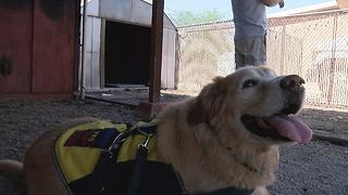 Good dog! Dog saves man from house fire