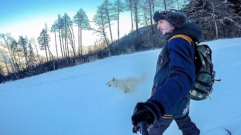 Snowboarding with a samoyed dog