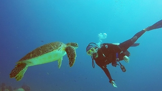 Diver Shares Magical Moment With Curious Sea Turtle - Video