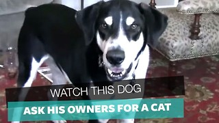 If You Need A Good Laugh Today, Watch Footage Owner Films Of His Dog Asking For A Pet Cat - Video