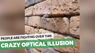 It's The Optical Illusion That's Causing People To Literally Fight. Do You Spot The Object? - Video