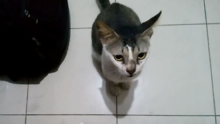 Strong bond between cat and owner - Video