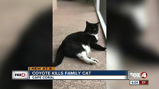 Coyote kills family cat on Christmas in Cape Coral - Video
