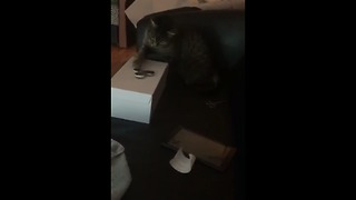 Cat plays with fidget spinner, really enjoys it