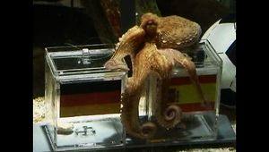 Psychic Paul the Octopus - Video