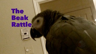 Why do parrots make this specific sound? - Video