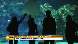Ripley's Aquarium of Canada - Video