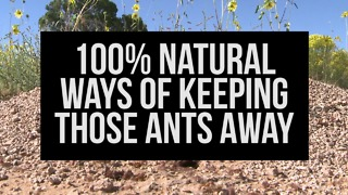 100% Natural Ways of Keeping Those Ants Away - Video