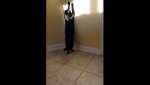 Cat named 'Shadow' plays with a shadow! - Video