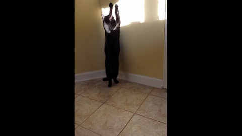 Cat named 'Shadow' plays with a shadow!