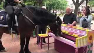 Police Horse Shows Talent at Piano - Video