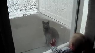 Baby cracks up at cat chasing snowflakes - Video