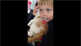 Compassionate toddler cuddles shivering kitten after bath - Video