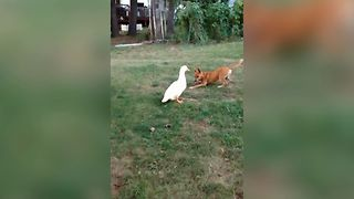 Two Unsuspecting Friends Play A Game Of Duck, Duck, Dog - Video