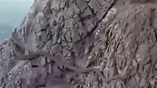 A huge snake found in a mountain near to city of Isfahan