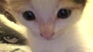 Little Kitten Fascinated By Herself On Front-Facing Camera! - Video