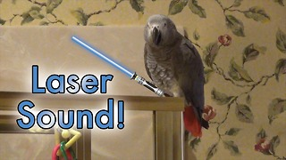 Genius parrot self-aware of the cool sounds he can make - Video