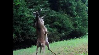 Camera captures epic fight between two bucks in Tennessee