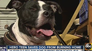 Teen risks it all to save his dog in Phoenix - Video