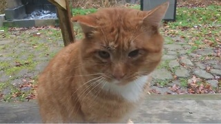 What Does This Tomcat Really Want From His New Family? - Video