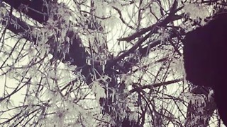 Ice Covers Trees in Texas Panhandle - Video