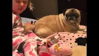 Little Girl Can't Contain Her Love for Her Pet Pug - Video