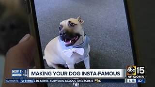 How to make your dog Insta-famous!