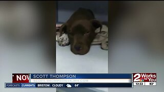 Animal rescue in dire need of donations, hosting fundraiser