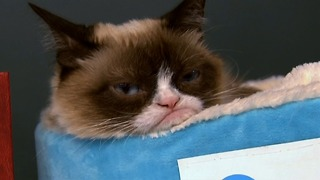 Grumpy Cat's Latest Book Singining In New York - Video