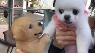 Real Dog Is Terrified of Toy Dog - Video