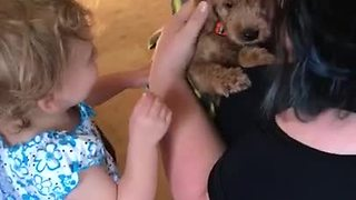 This Toddler Can't Control Her Emotions After Meeting New Puppy - Video