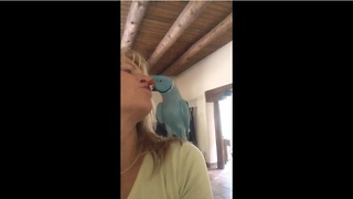 Parrot Has An Unforgettable Conversation With His Owner  - Video