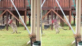 Watch: Playful Baby Kangaroo Acts Like 'excited Toddler' After Discovering Swing Set In Australian Backyard