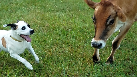 Unlikely Rescue Pals Frolic Together in a Field