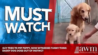 Guy Tries To Pet Puppy, Now Witnesses Funny Thing Daddy Dog Does Out Of Instinct - Video