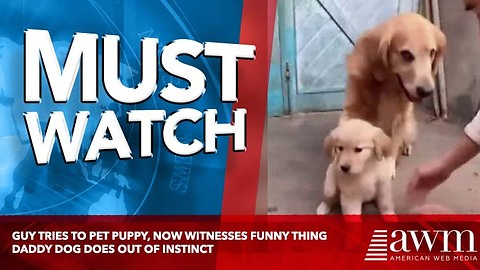 Guy Tries To Pet Puppy, Now Witnesses Funny Thing Daddy Dog Does Out Of Instinct