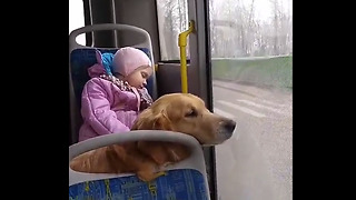 Little Girl Naps With Her Doggy During Bus Ride - Video