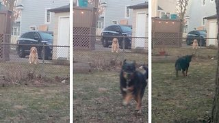 Adorable moment dog wants to be friends but can't - Video