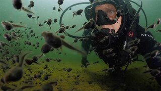 Mesmerizing Moment Scuba Diver Swims With Hundreds Of Tadpoles