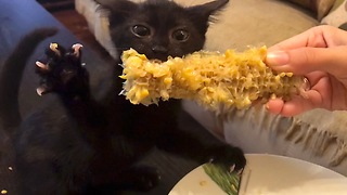 Kitten discovers newfound love for eating corn