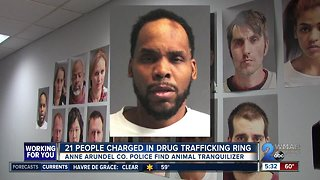 Kingpin and drug trafficking ring busted in Anne Arundel County