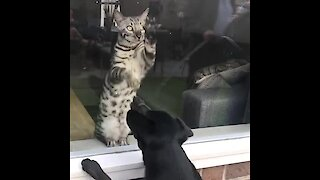 Cat And Dog Separated By Window Try To Make Contact With Each Other